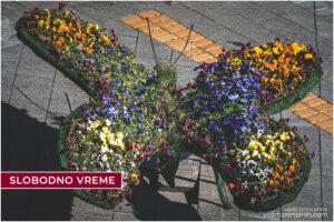 cvetni leptiri trg slobode zrenjanin