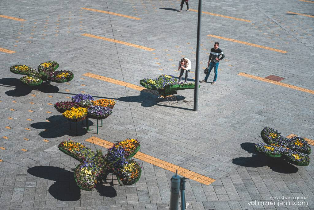 cvetni leptiri trg slobode zrenjanin 045