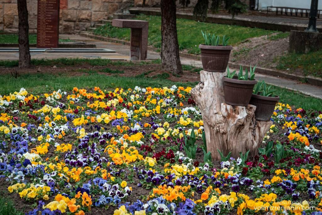 cvetne sadnice jkpcistocazrenjanin 002