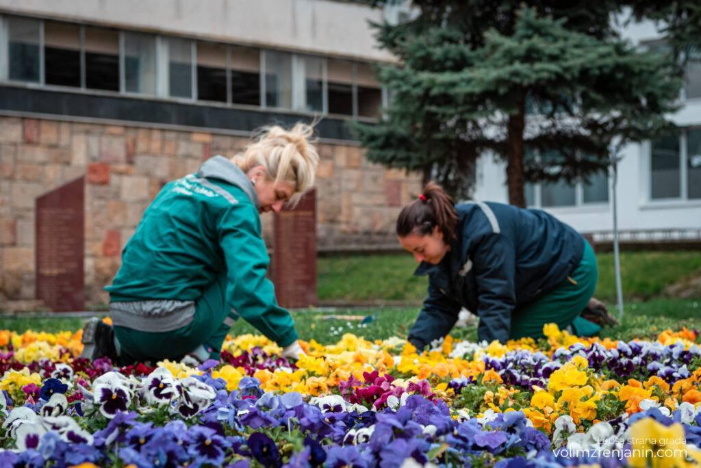 cvetne sadnice jkpcistocazrenjanin 018
