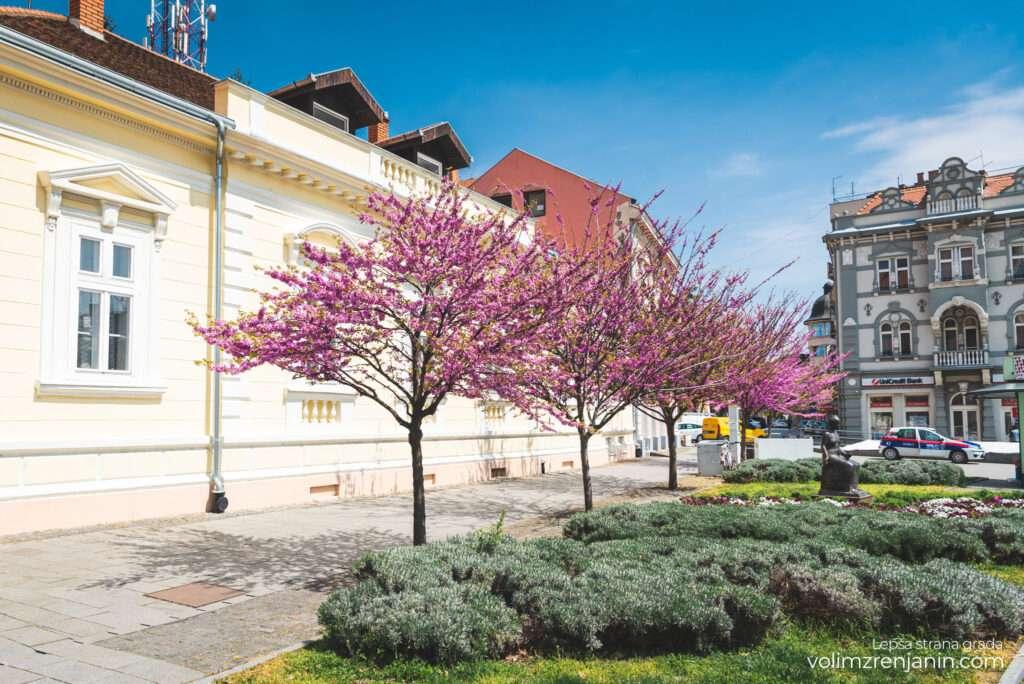 grad zrenjanin proleće 001