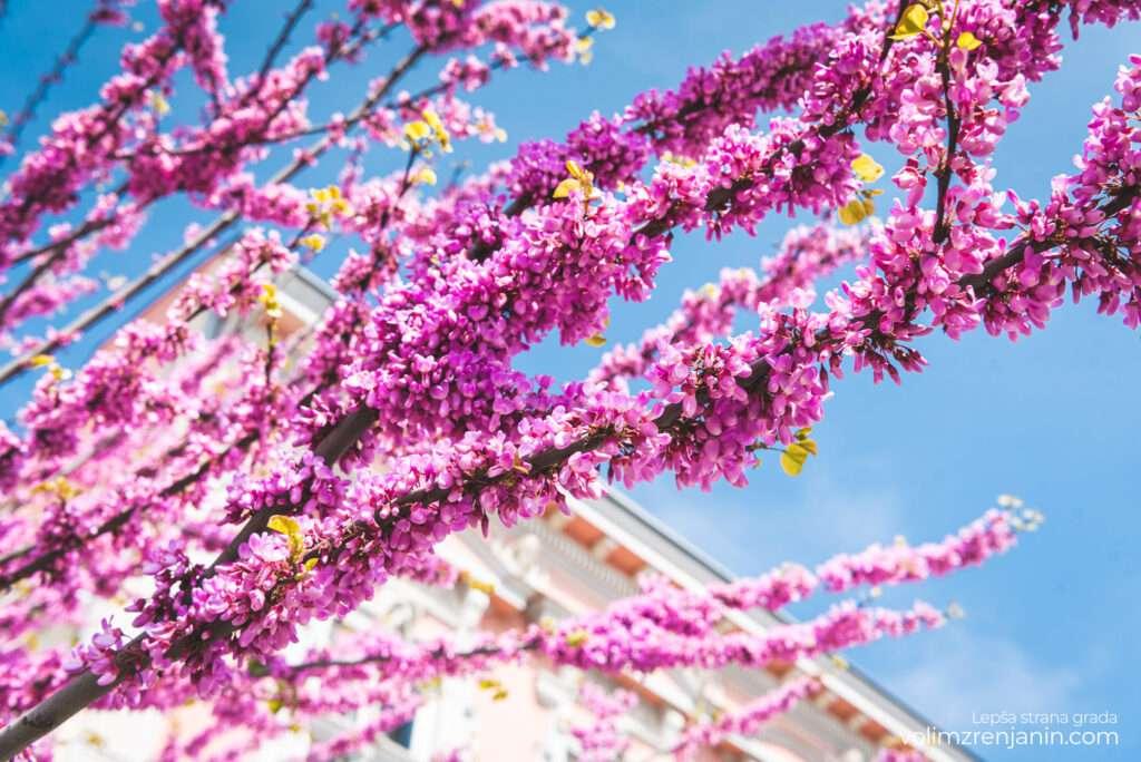 grad zrenjanin proleće 015