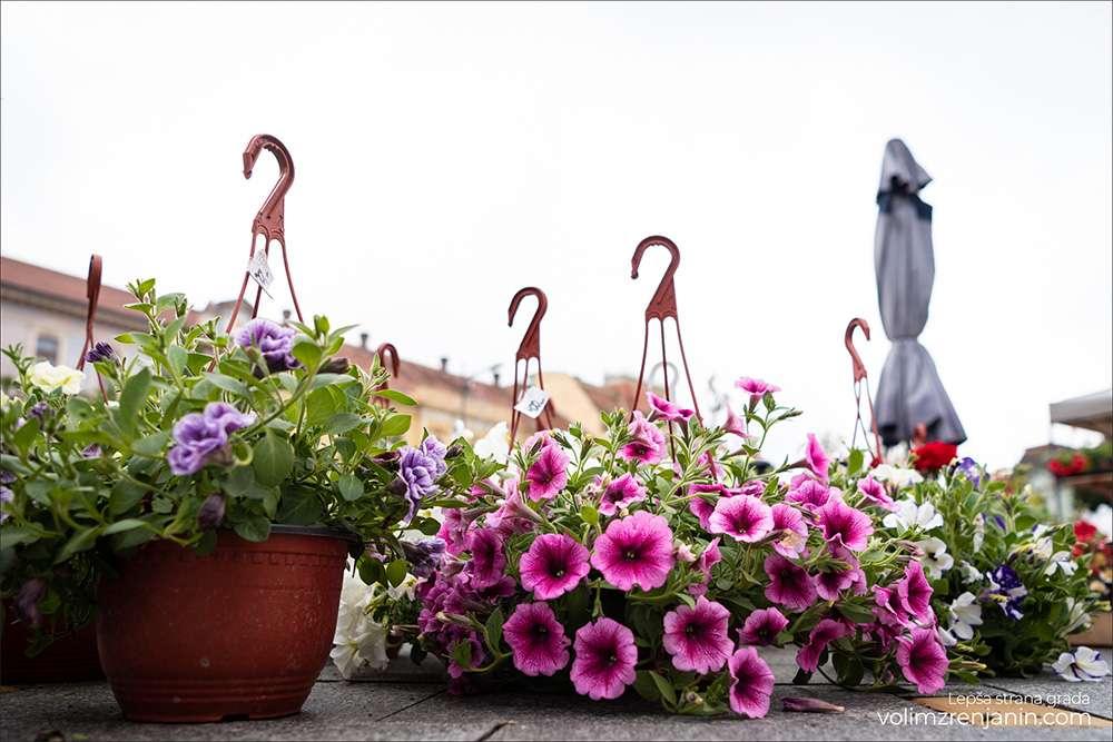 cvetna pijaca zrenjanin 1
